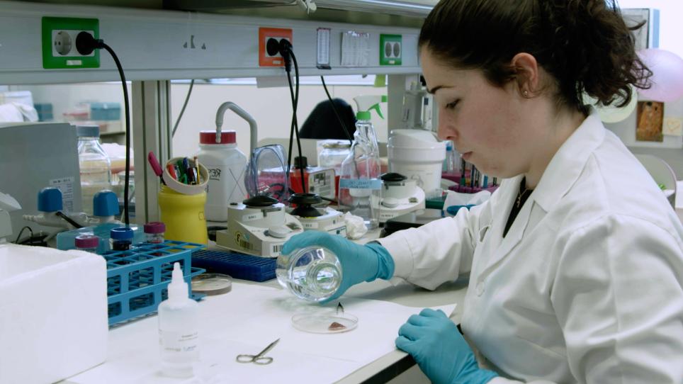 طريقة عالية الإنتاجية في الموقع لتقدير البليدي النووي الكبدي في الفئران