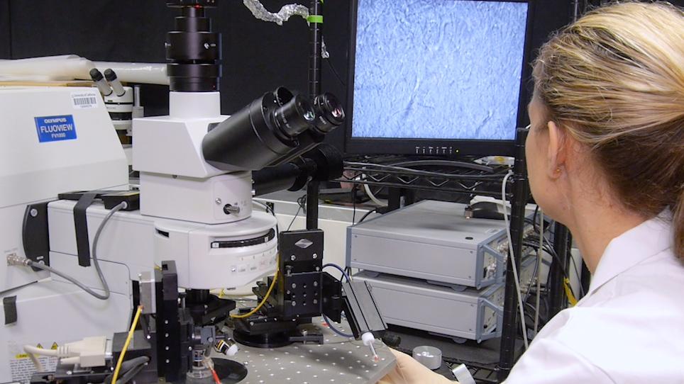 루시퍼 황색 이온토포레시스를 사용하여 성상세포 형태 시각화