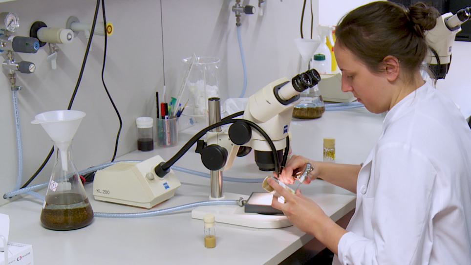In Vivo Optical Calcium Imaging of Learning-Induced Synaptic Plasticity in <em>Drosophila melanogaster</em>