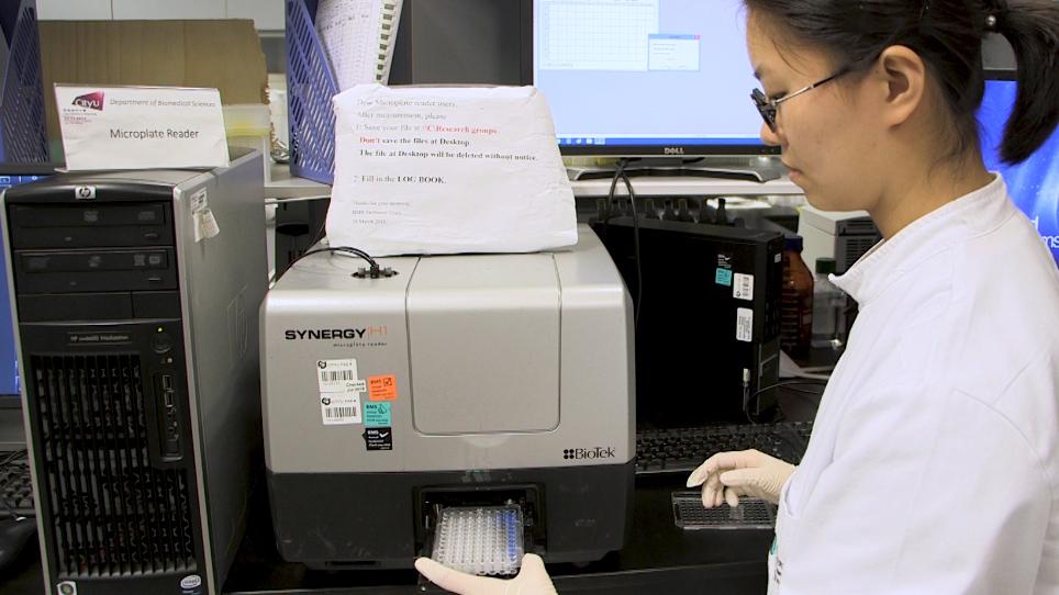 Native Polyacrylamide Gel Electrophoresis Immunoblot Analysis of Endogenous IRF5 Dimerization