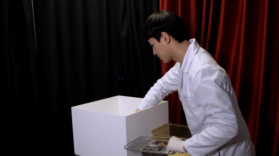 필로카핀 유도 간질 마우스에 있는 기억 기능의 평가