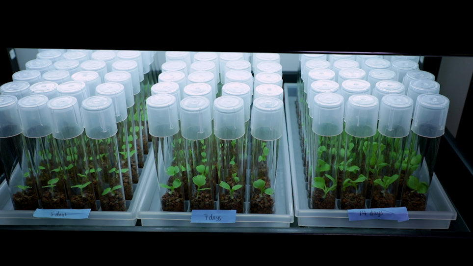 A Gnotobiotic System for Studying Microbiome Assembly in the Phyllosphere and in Vegetable Fermentation