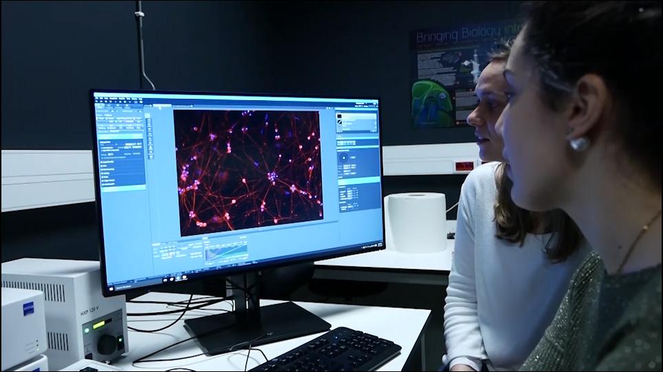 독실성 신경절 뉴런의 고립과 문화