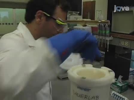 Immunoprécipitation de la chromatine des cellules souches embryonnaires humaines