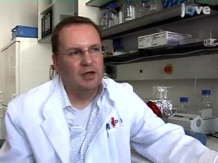 Entrevista: HIV-1 DNA proviral Excisão Usando um Recombinase Evolved