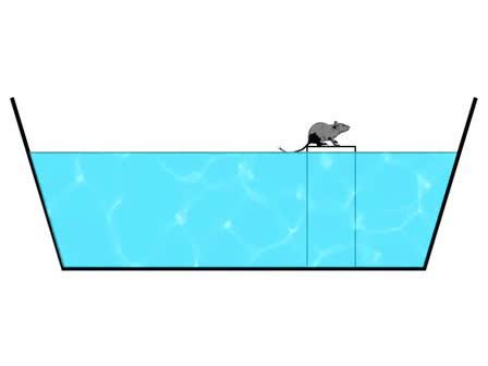 Morris Water Maze Experiment