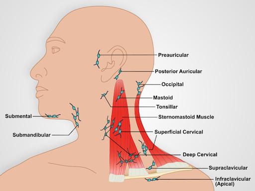 Lymphknoten hinter dem ohr