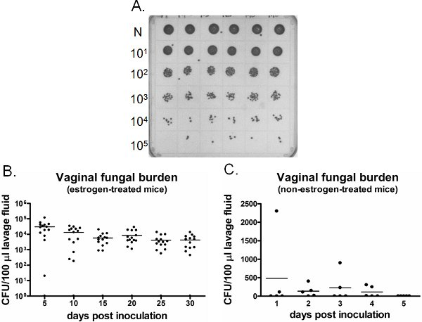 vaginalen epithel der oralen kontrazeptiva nutzer