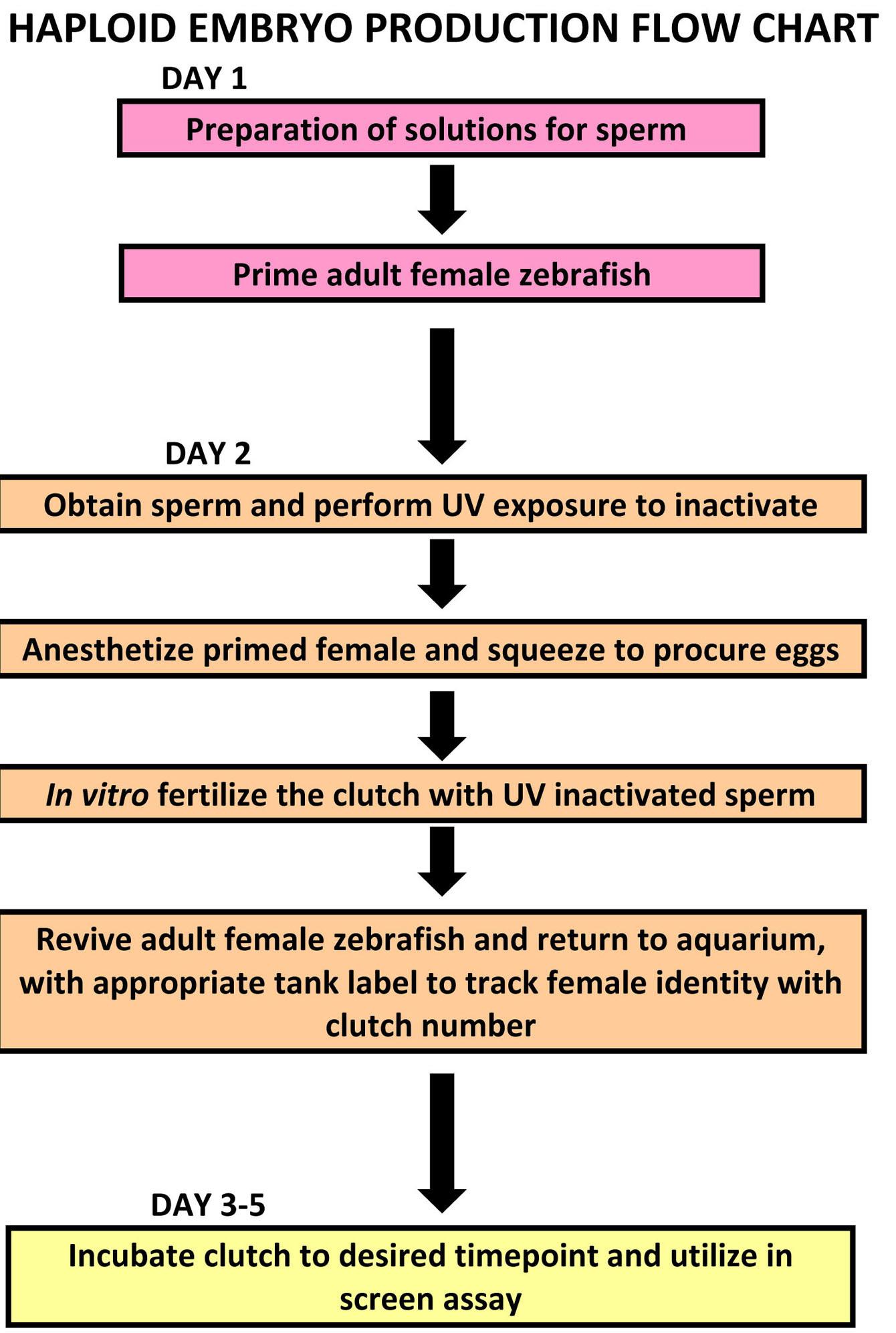 2 Herausforderung Sperma Minuten Indica Skincare: