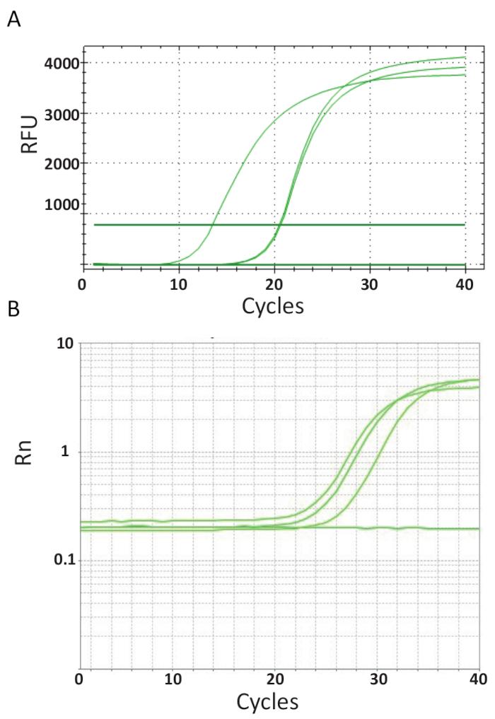 正確 性 pcr PCRの原理を図解付きでわかりやすく解説【初心者向け】