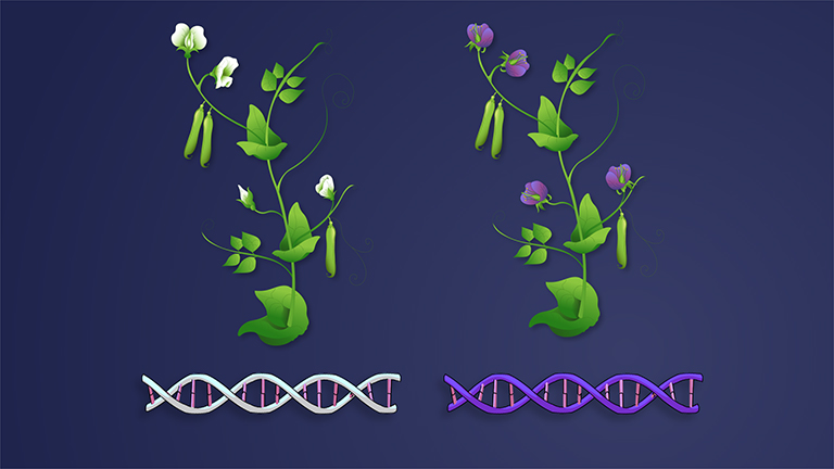 Genetics of Organisms
