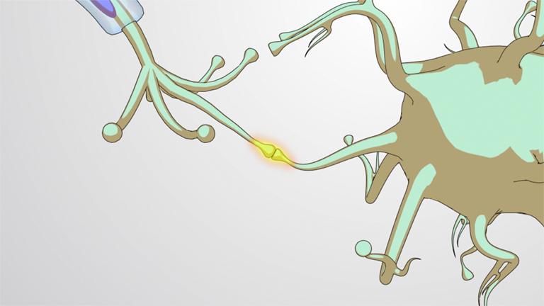 Synaptische Signalgebung
