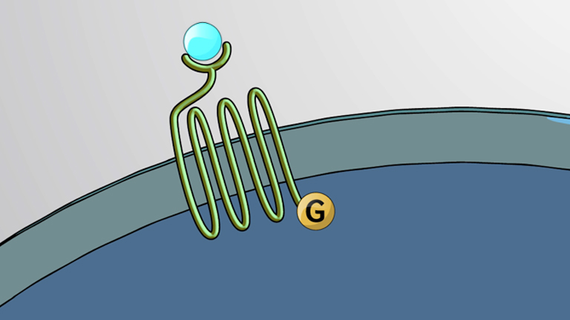 Cascadas de señalización intracelular