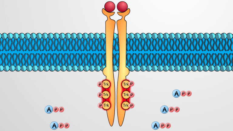 Enzyme-linked Receptors