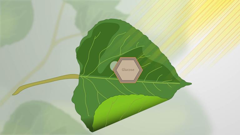 Che cos'è la fotosintesi?