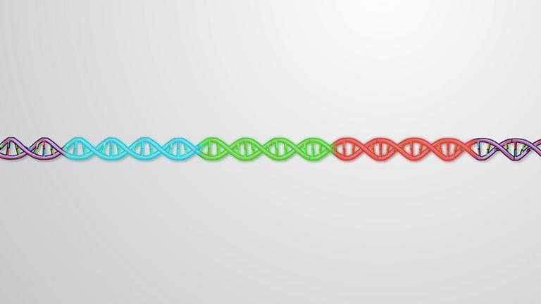 Organización de genes