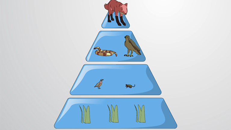 Trophic Efficiency