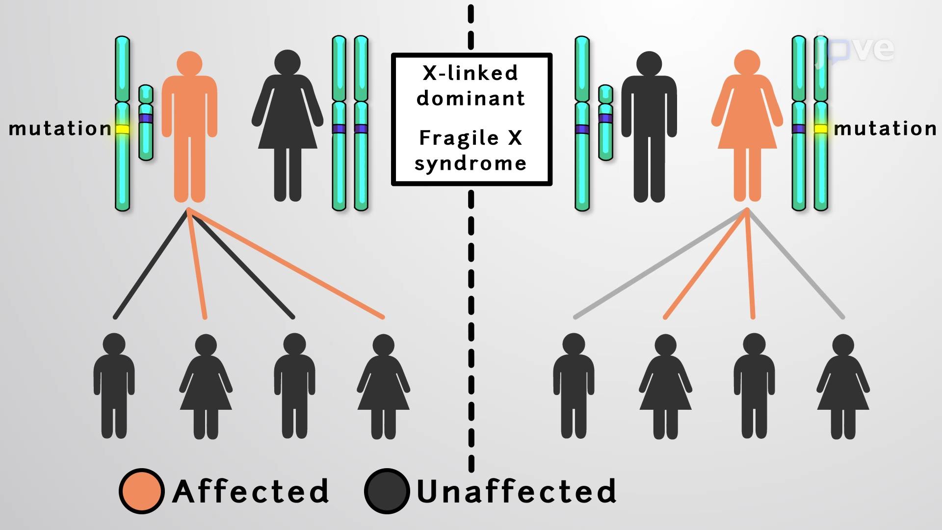 반성유전 질환