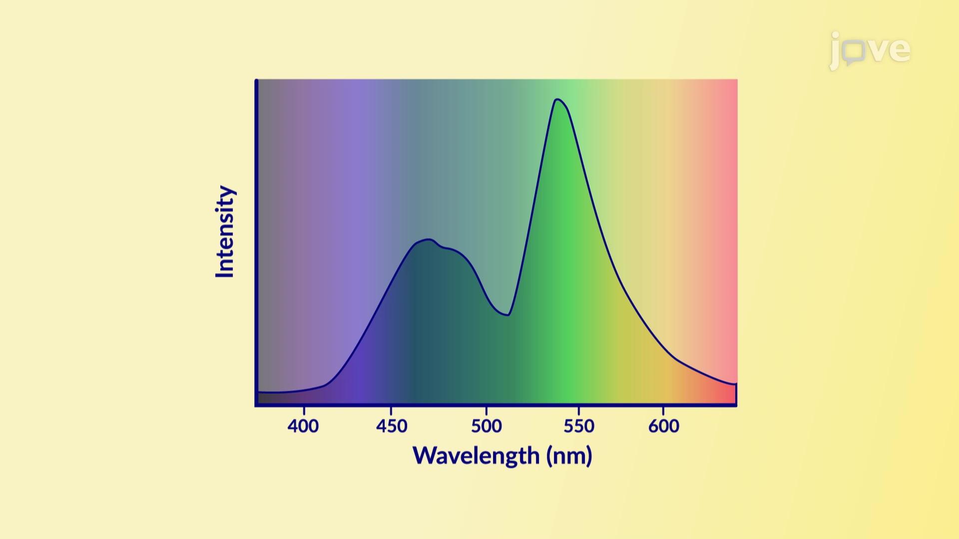 Synthesis of Luminol
