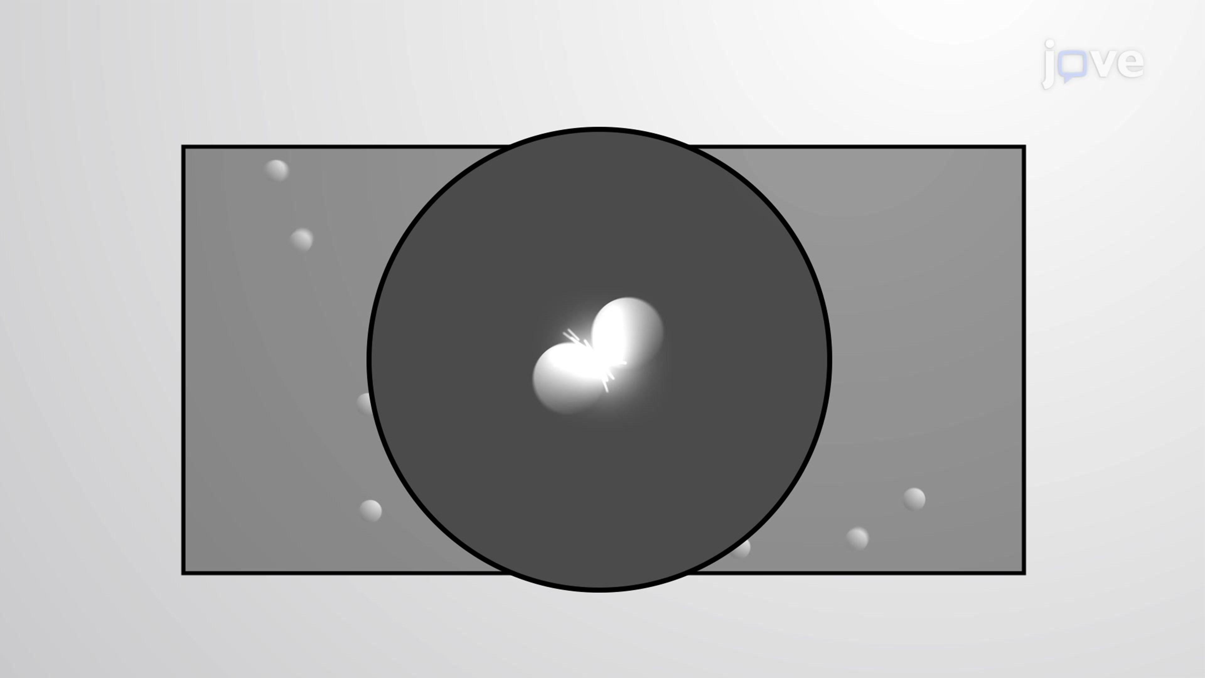 分子运动理论:基本假设