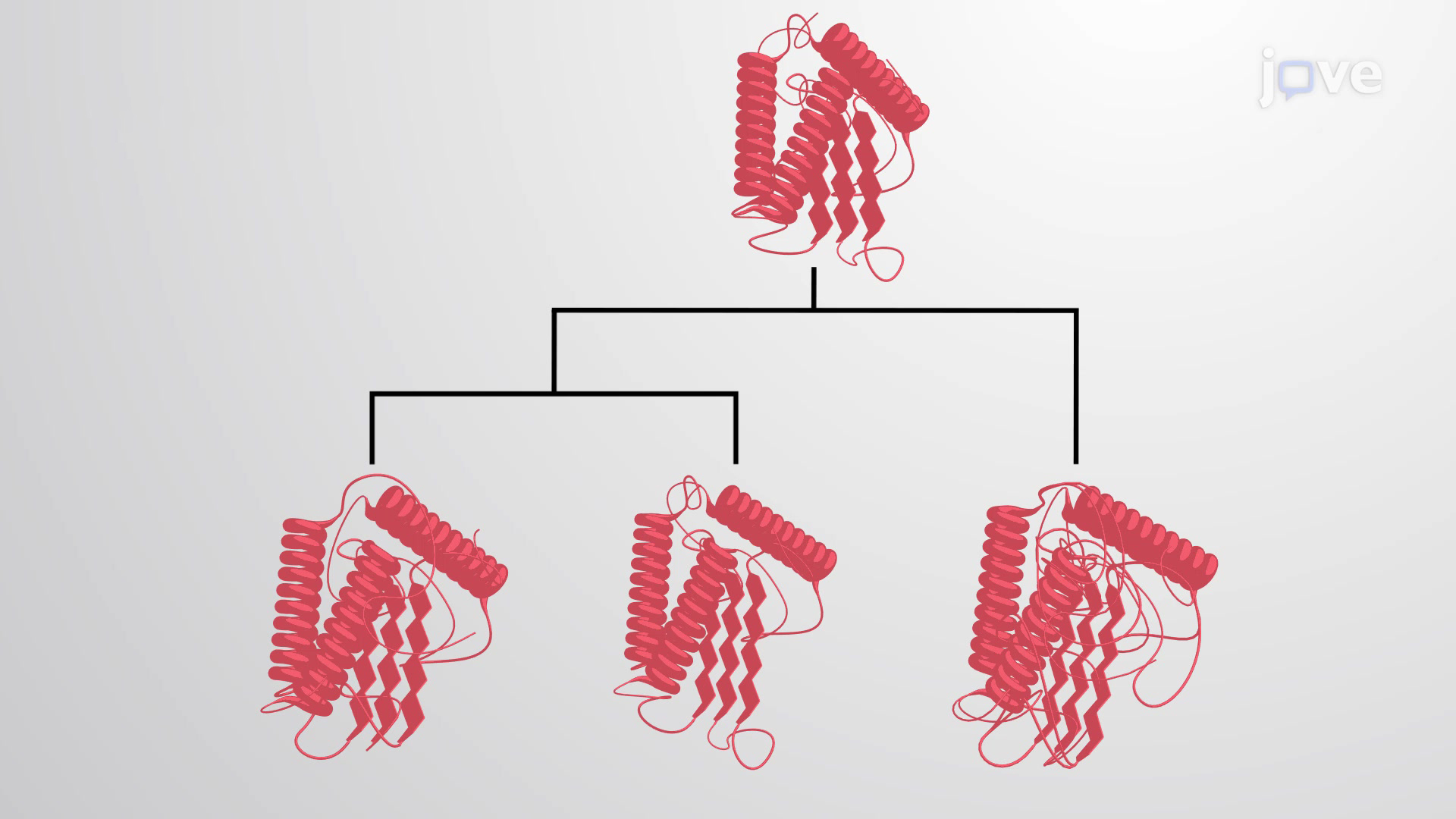 Protein Families