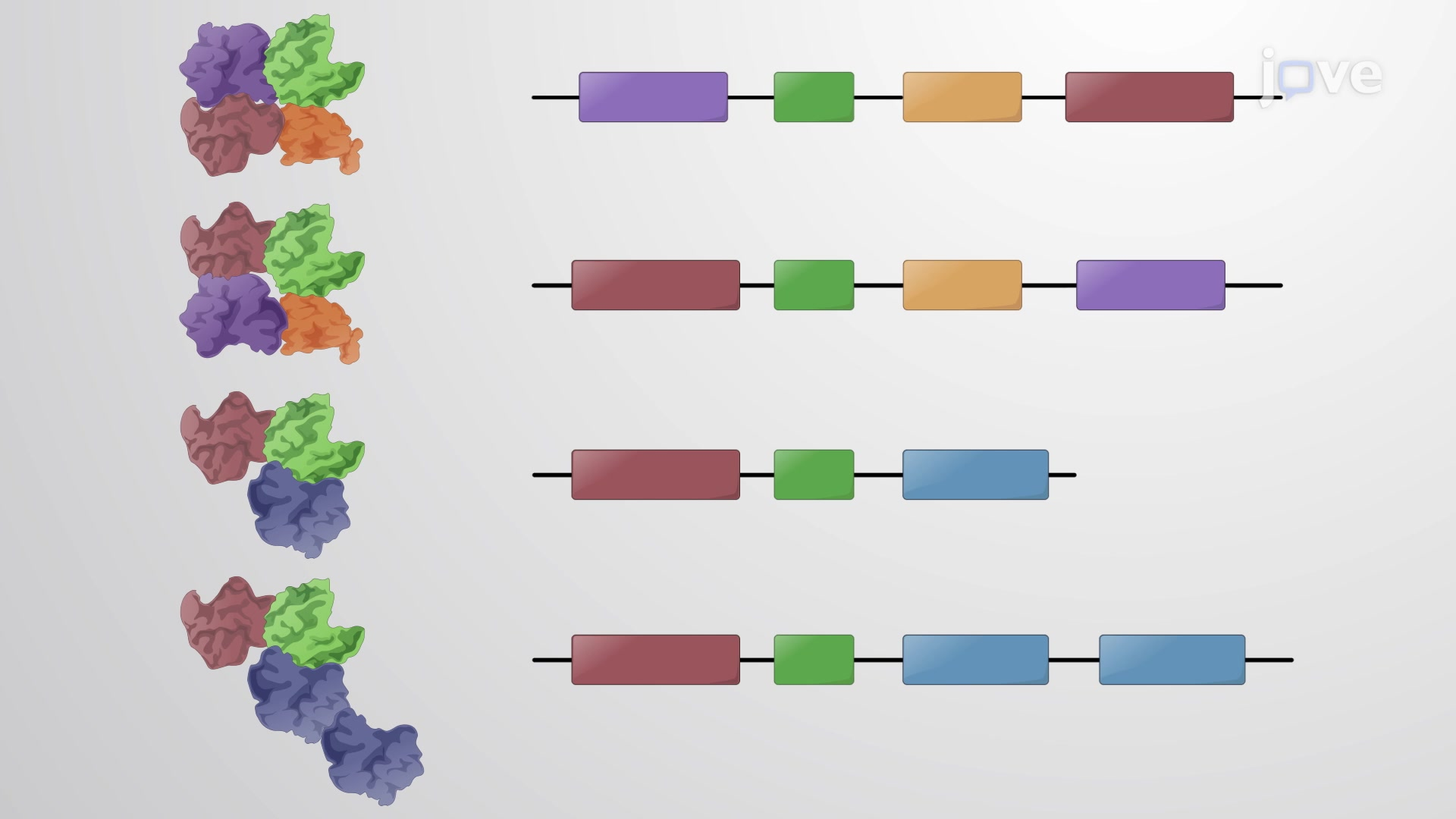 Conservation of Protein Domains over Different Proteins