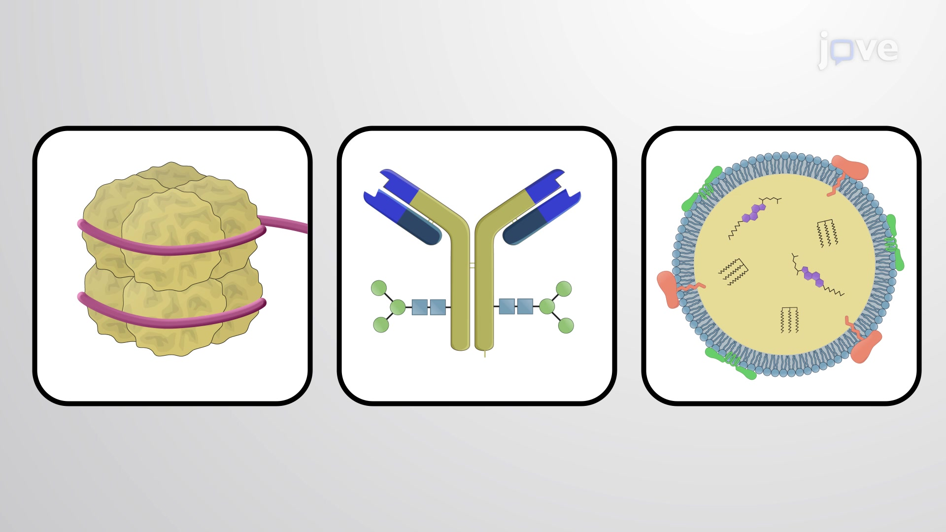 Conjugated Proteins