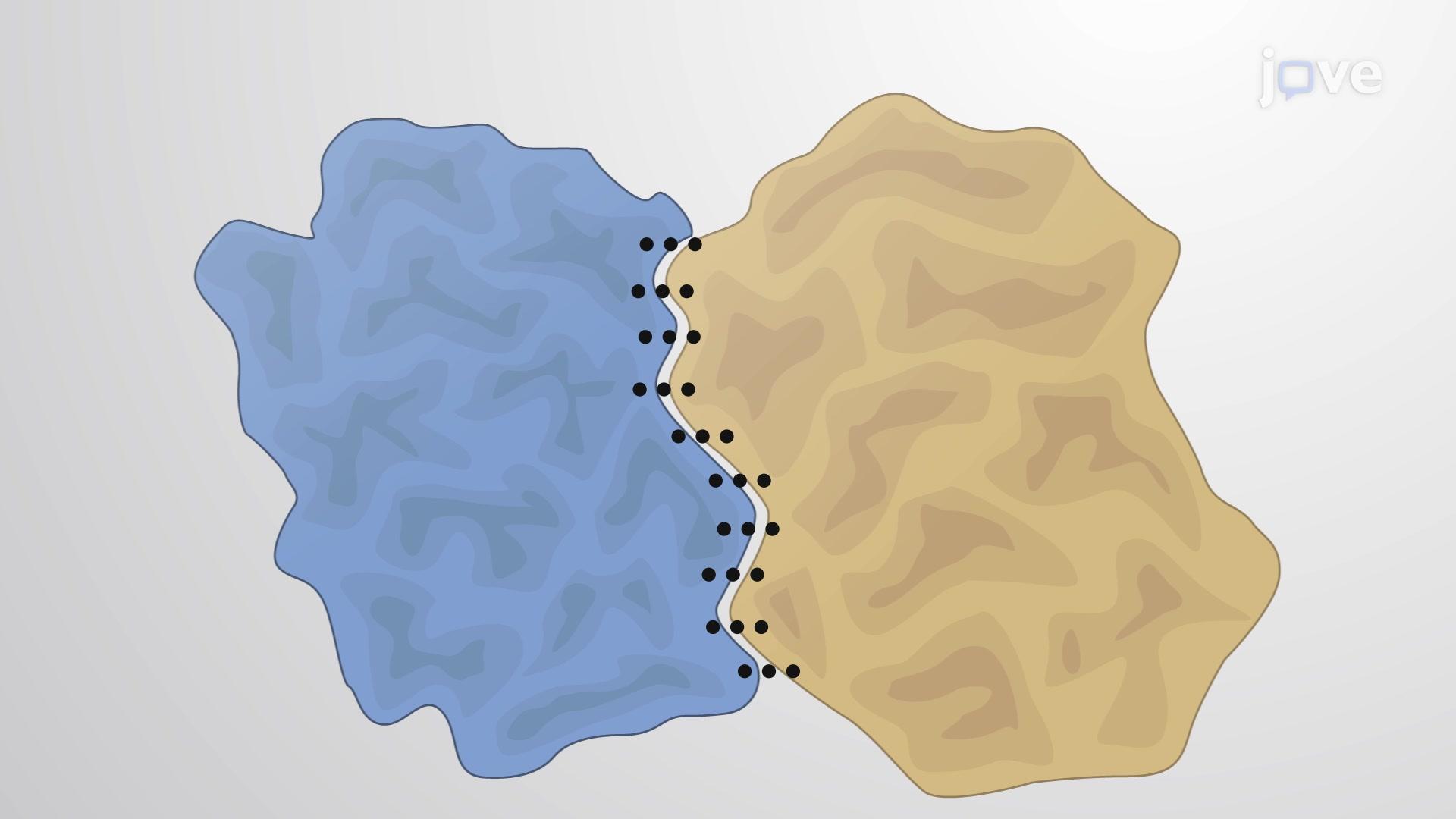 Interfacce Proteina-Proteina