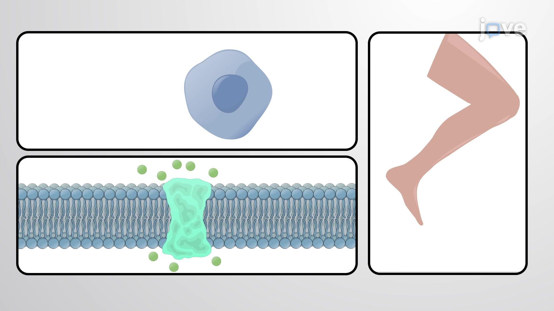 Funzioni meccaniche delle proteine 