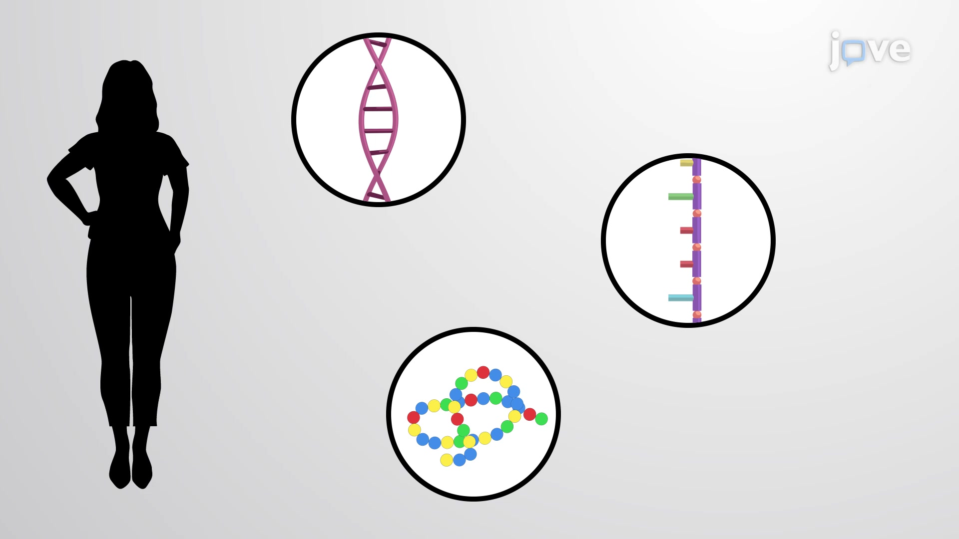 DNA as a Genetic Template