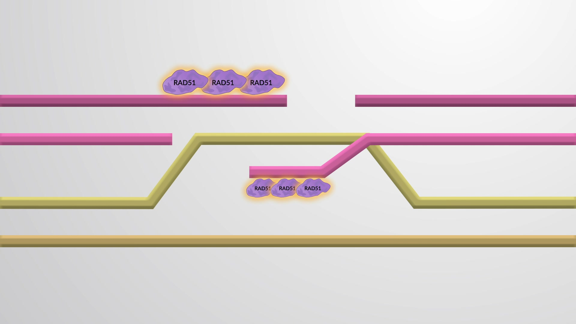 Homolog Rekombinasyon