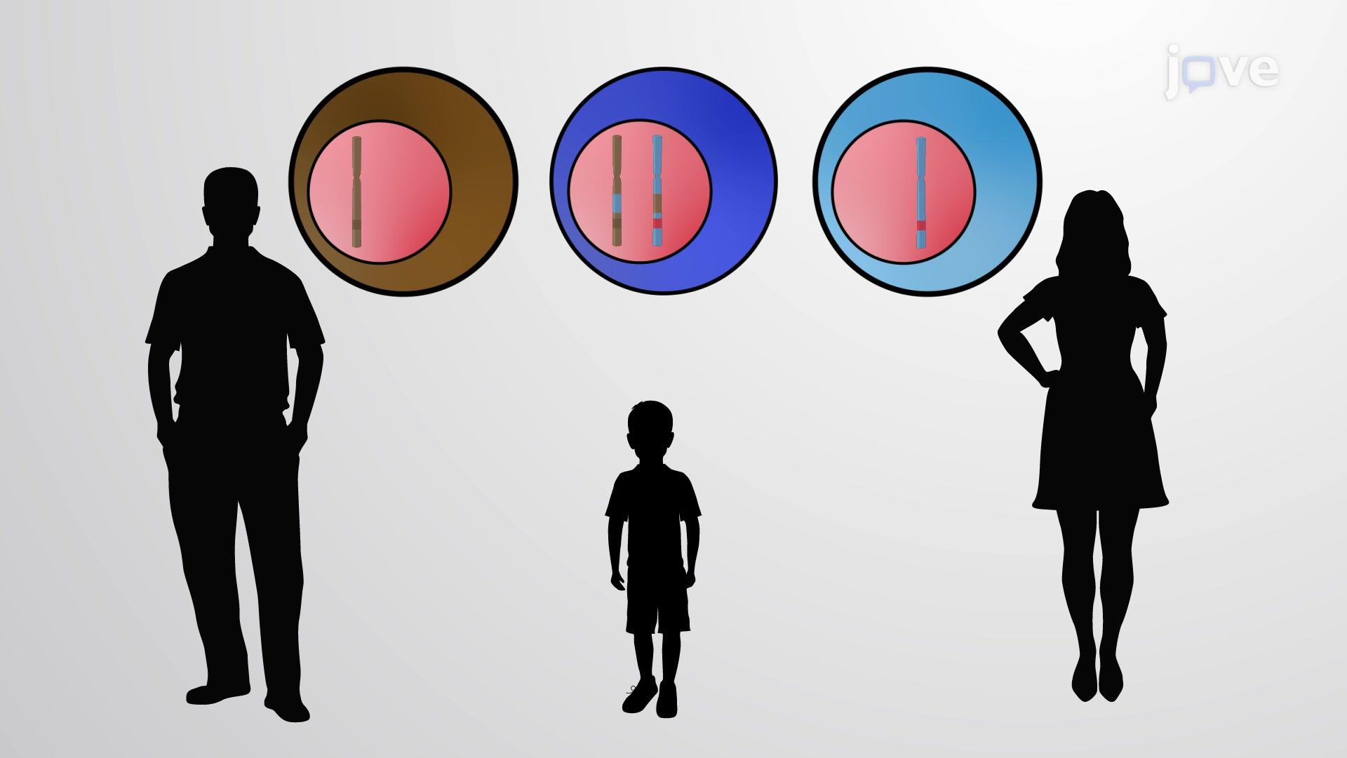 Gen Konversiyonu