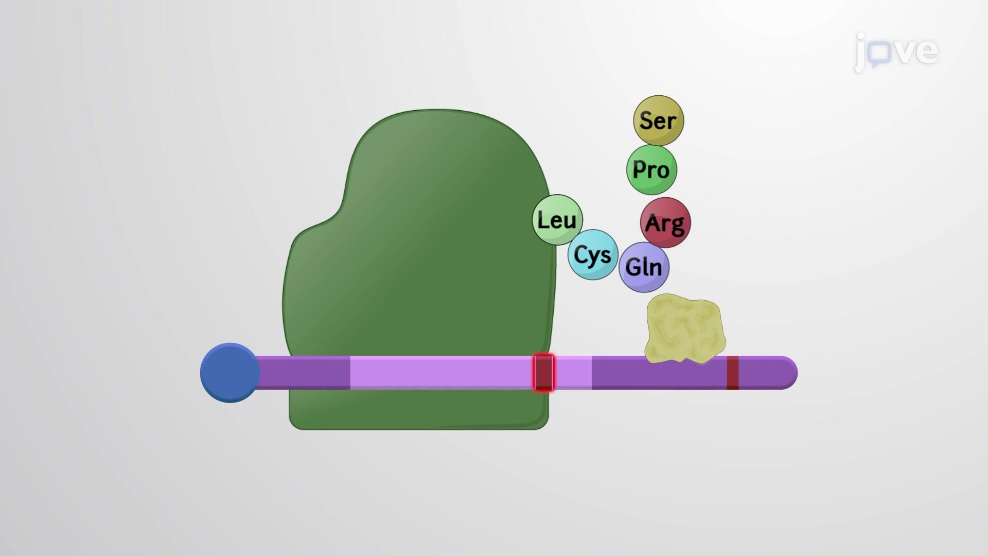تحلل حمض نووى ريبوزى معتمد على اجزاء لا معقولة