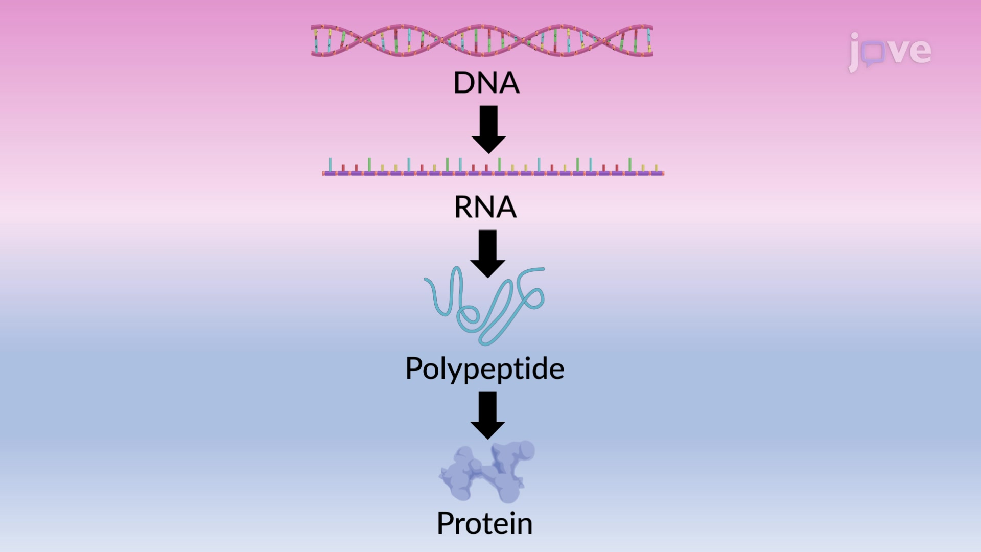 Proteins: From Genes to Degradation