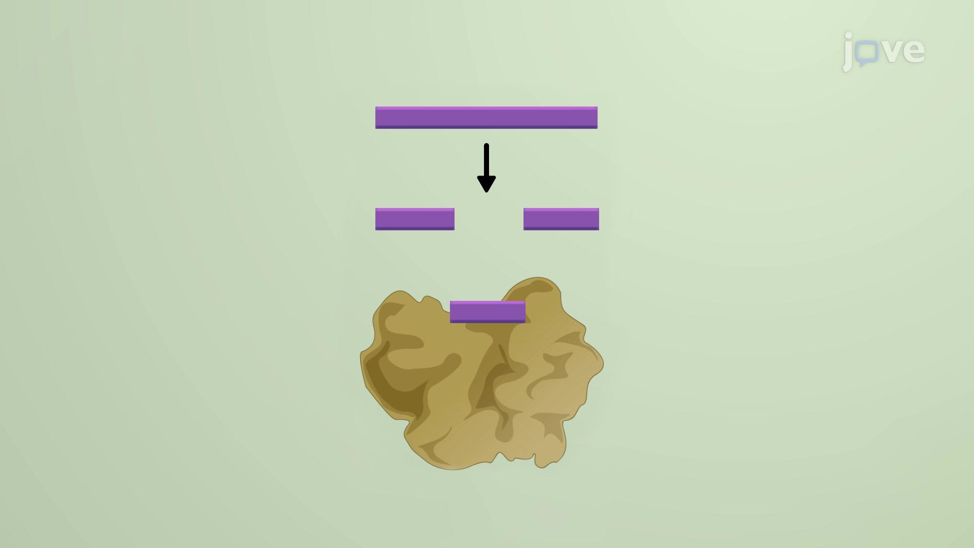 piRNA-Piwi(微小)相互作用核糖核酸