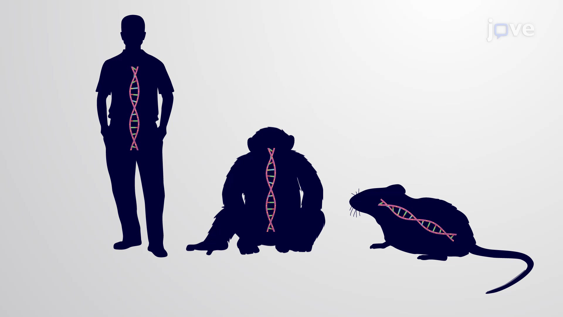 Evolutionary Relationships through Genome Comparisons