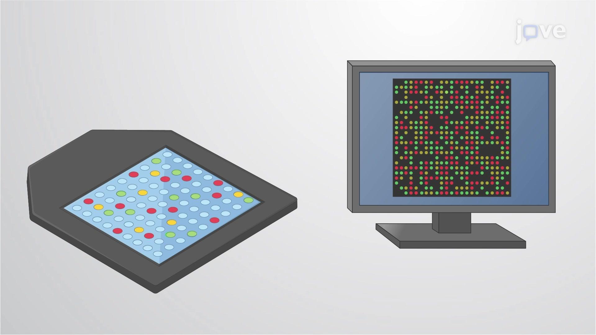 DNA Microarrays