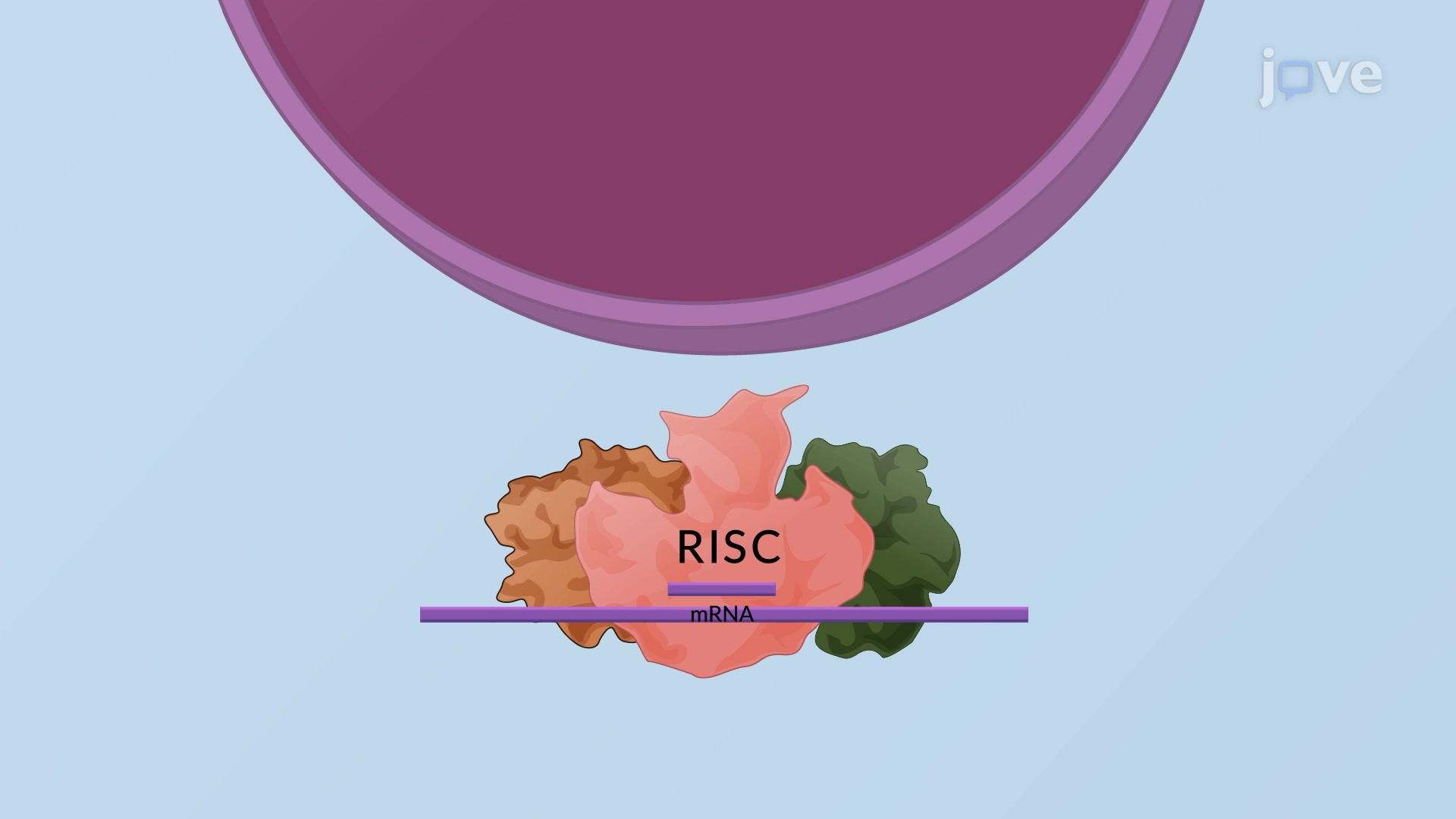 Experimental RNAi