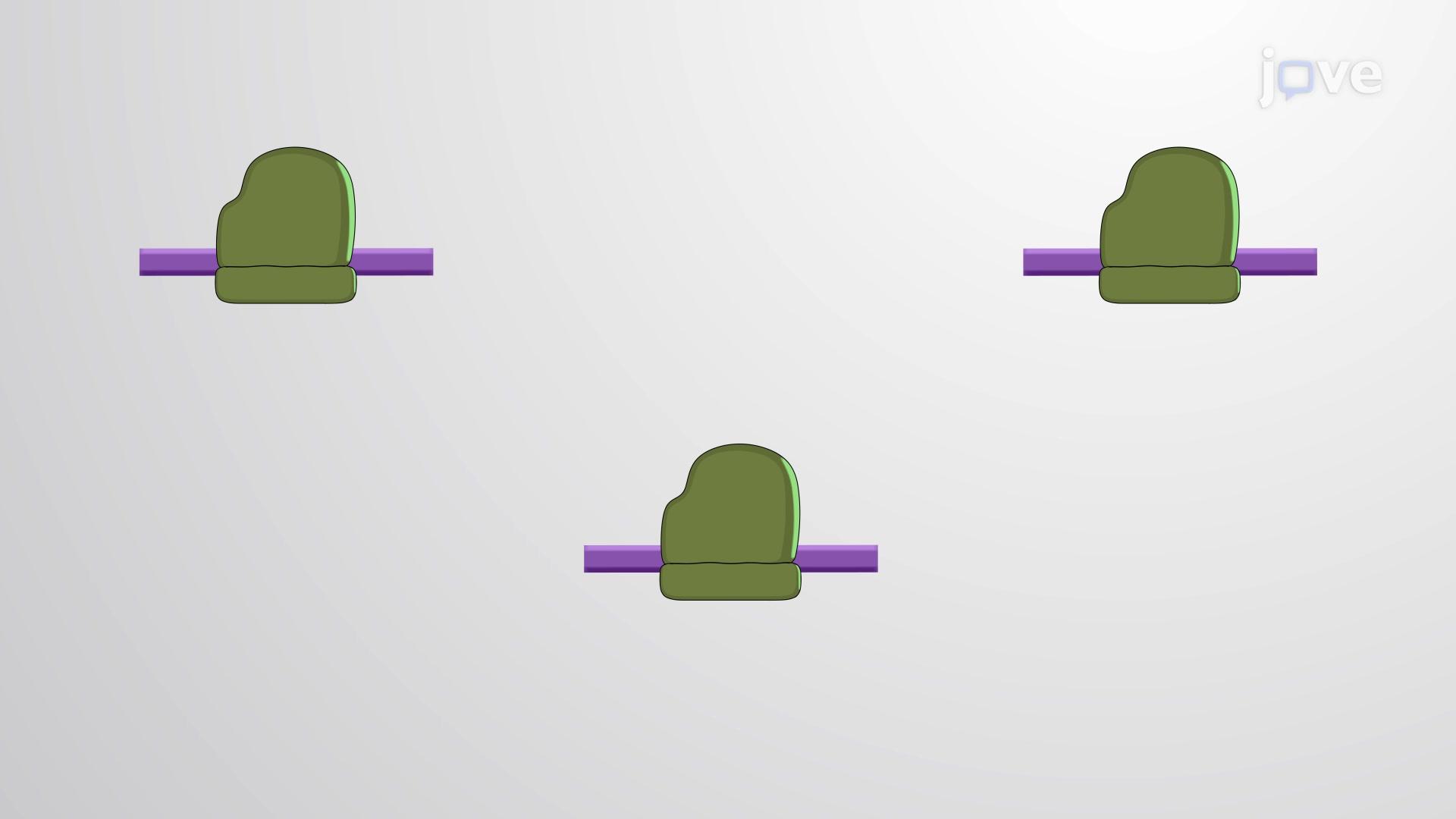 Ribosome Profiling