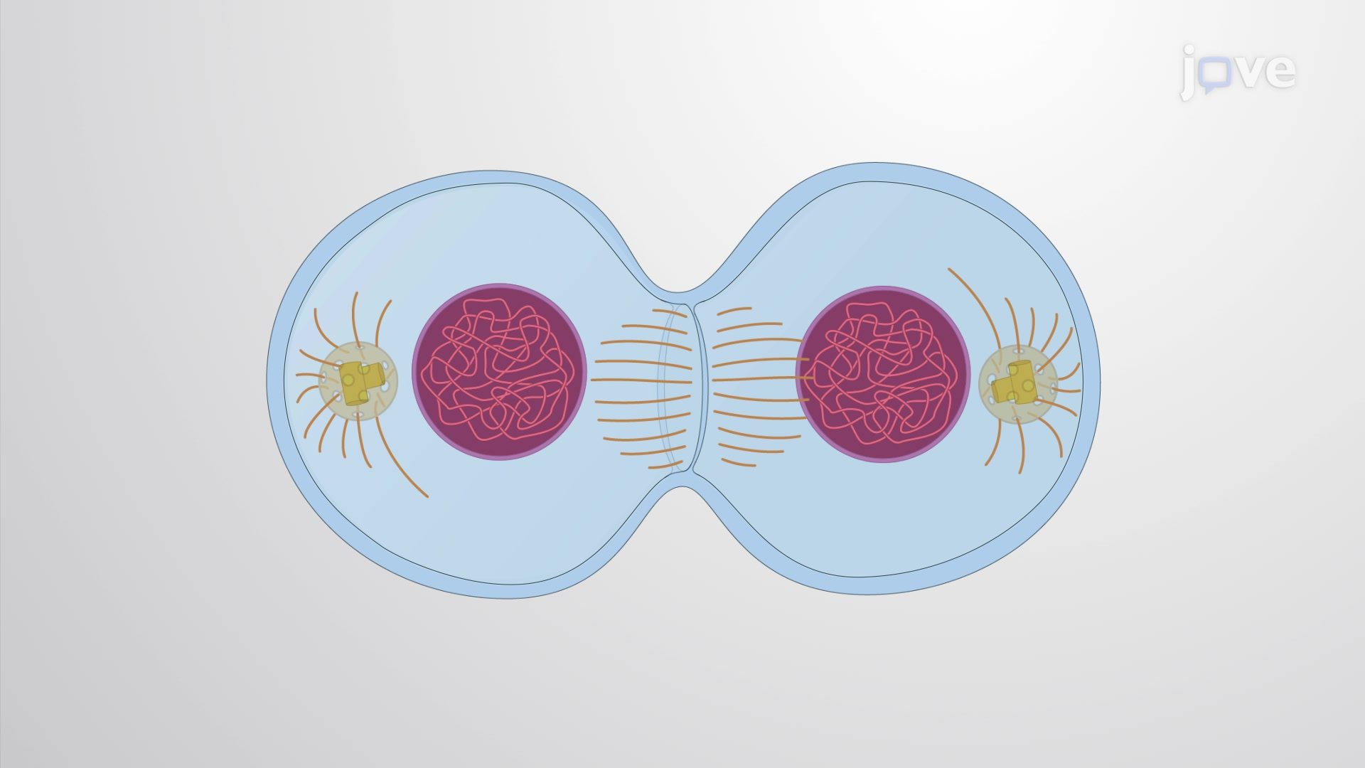 Determining the Plane of Cell Division
