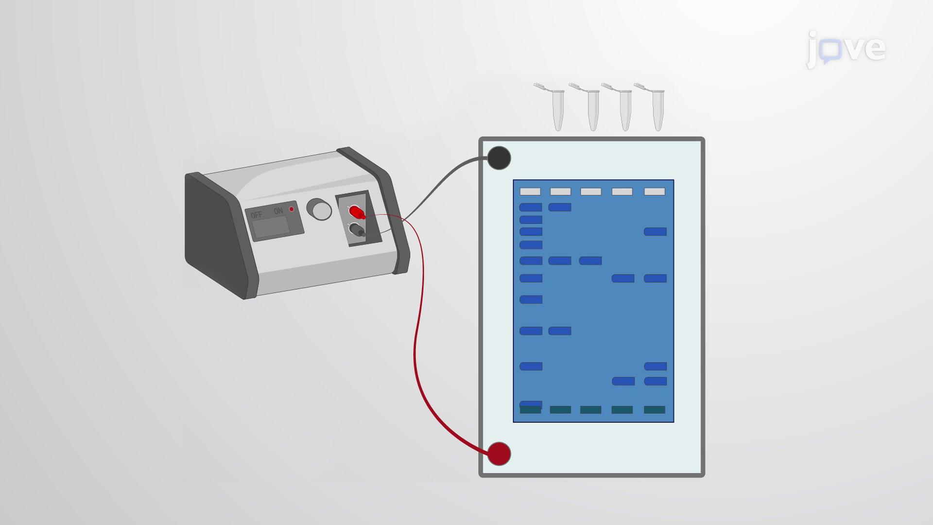 Maxam-Gilbert Sequencing
