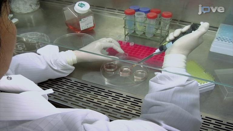 Fonksiyonel Motifler ve Bağlama Ortaklar peptid bazlı Kimlik