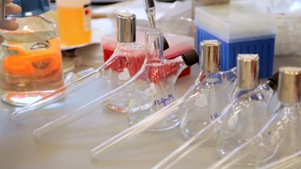 Síntesis rápida y Detección de factores de transcripción activados químicamente con los periodistas basados en las buenas prácticas agrarias