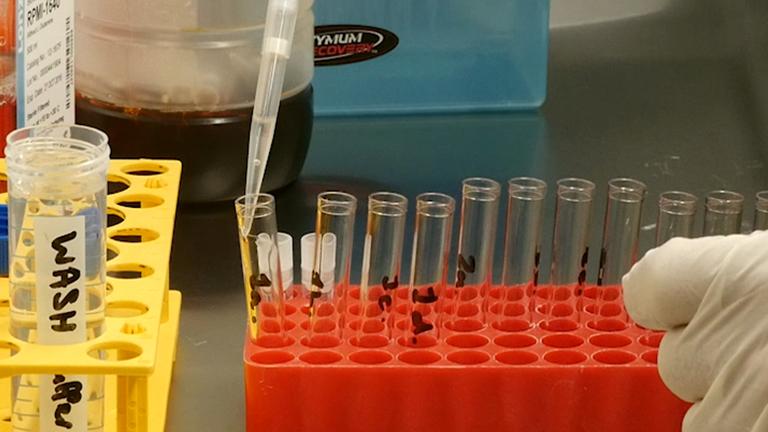 Zeitliche Verfolgung von Zellzyklus mittels Durchflusszytometrie, ohne die Notwendigkeit für die Synchronisation