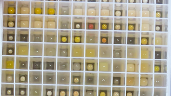 Automated Modular High Throughput Exopolysaccharide Screening Platform Coupled with Highly Sensitive Carbohydrate Fingerprint Analysis
