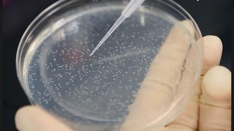 实验方法来研究线粒体定位和核细胞周期激酶CDK1功能