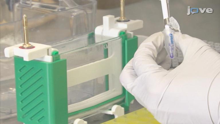 荧光各向异性作为一种工具来研究蛋白质相互作用