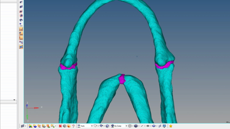 Building Finite Element Models to Investigate Zebrafish Jaw Biomechanics