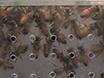 تشريح ومراقبة من عسل النحل ظهري سفينة لدراسات وظيفة القلب