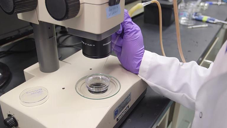 С помощью мыши яйцеклеток для оценки человеческого гена функции во время мейоза я